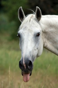 horse-937683_1920
